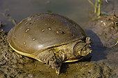 龟,国家公园,拉贾斯坦邦,印度