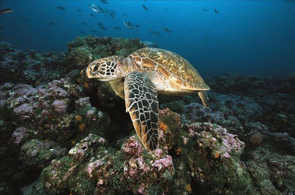 壁纸 海底 海底世界 海洋馆 水族馆 桌面 600_397
