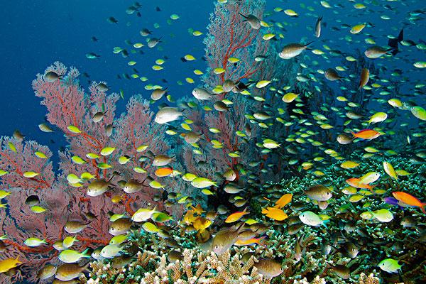 海洋扇贝动物的图片