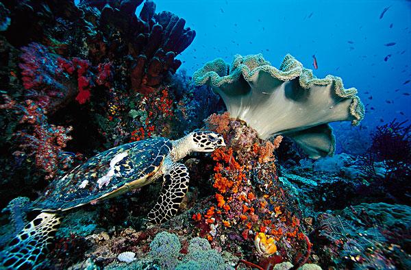 壁纸 海底 海底世界 海洋馆 水族馆 桌面 600_394