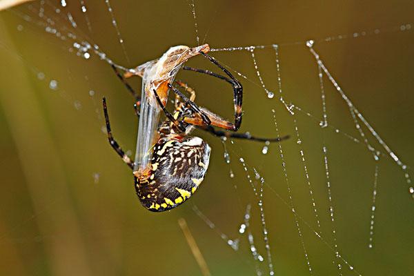 红蜘蛛第一部