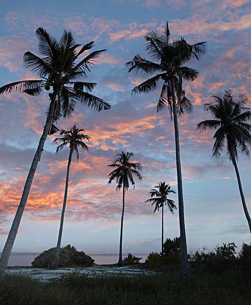>椰子树图片