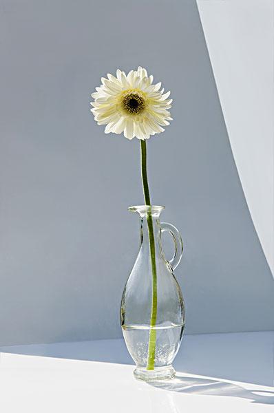 油瓶子做花盆图解