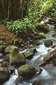背景 夏威夷/夏威夷,夏威夷大岛,阿卡卡瀑布,小溪,石头,竹子,背景...
