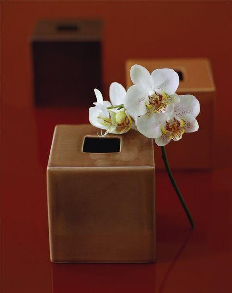 与兰花立方米花瓶