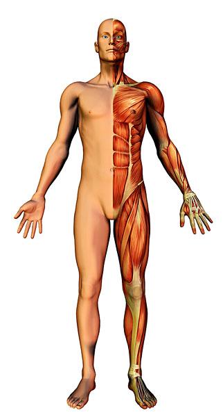 人体皮肤米字纹理素材
