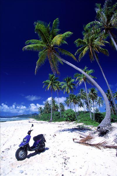椰子树图片-椰子树图片图片下载-椰子树图片图片大全