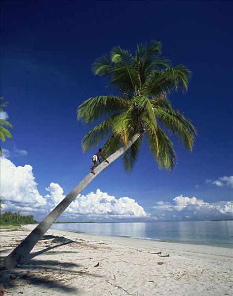 棕榈树,热带沙滩,蓝天,远景,白云,海岸,坦桑尼亚,东非,非洲