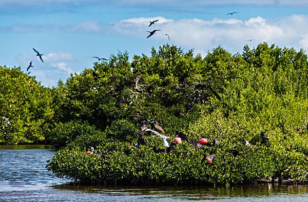 生物群,泻湖,巴布达岛,安提瓜和巴布达,西印度群岛,加勒比,中美洲