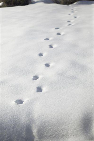 俯拍,脚印,雪地