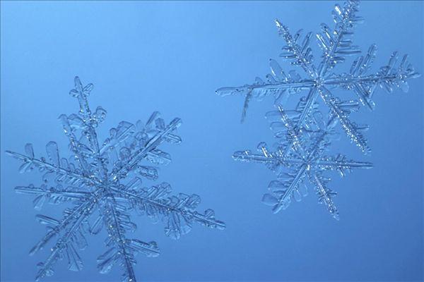 欧式浅蓝色墙纸树