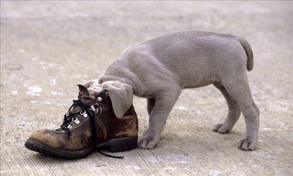 动物创意鞋子图片