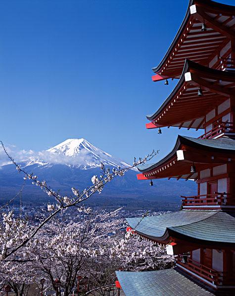 塔,樱花,富士山,山梨县,日本