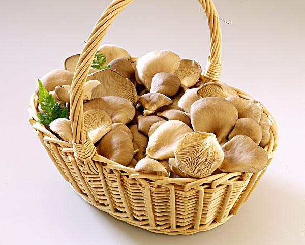 篮子,蘑菇云,蘑菇