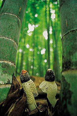 蘑菇森林系列线稿画