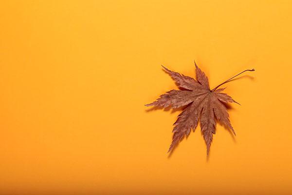 枫叶贴画图虫子