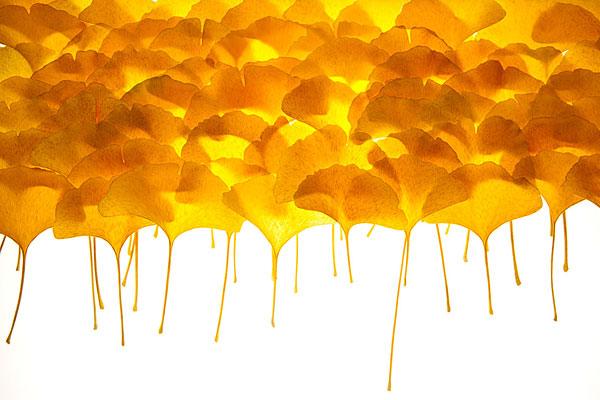 橙色小太阳简笔画