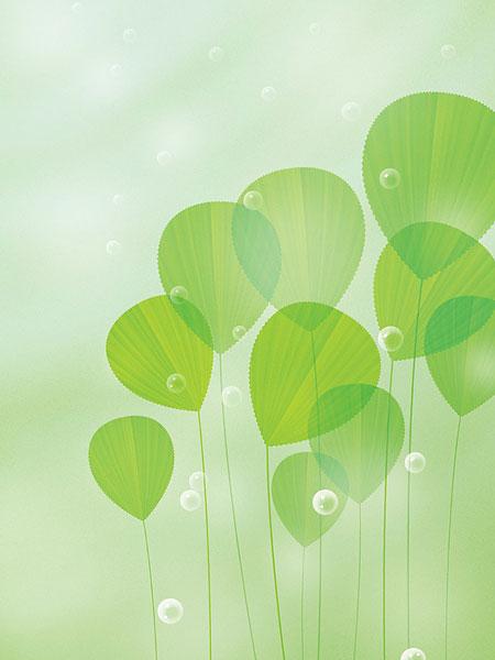绿色叶子与水滴_全景图片