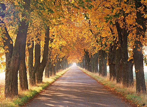 秋天,树荫,彩色,树上,排列,乡间小路,瑞典