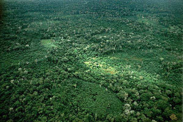 俯视,风景,亚马逊河