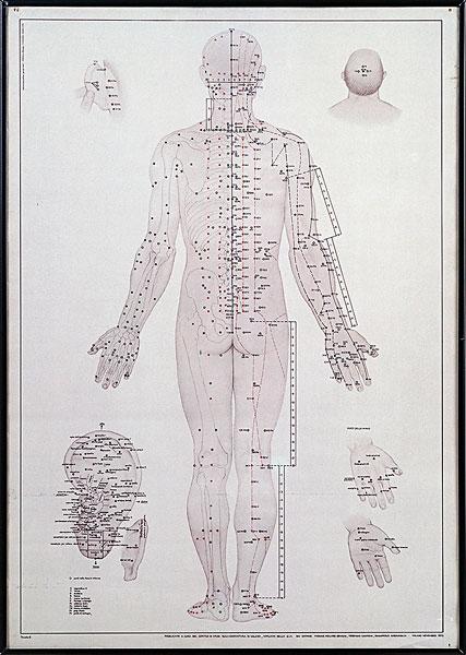 背部身体结构_背部经络图-7262图片网