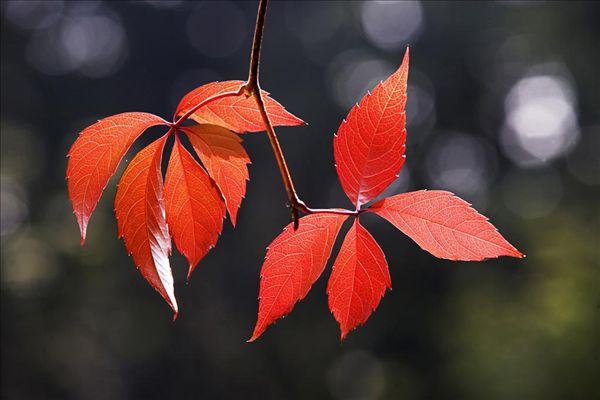 代表秋天的植物