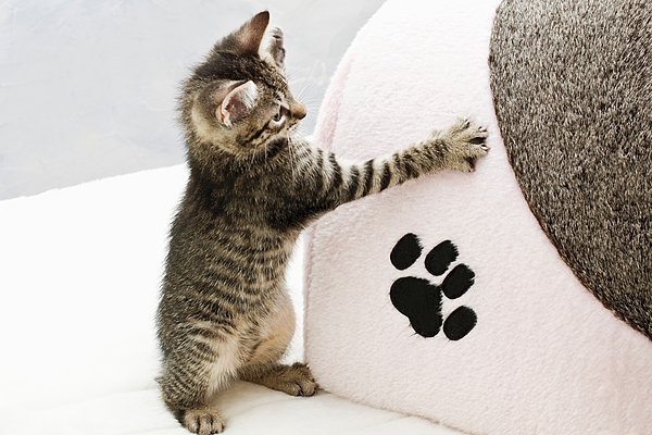 小猫动物脚印图片大全