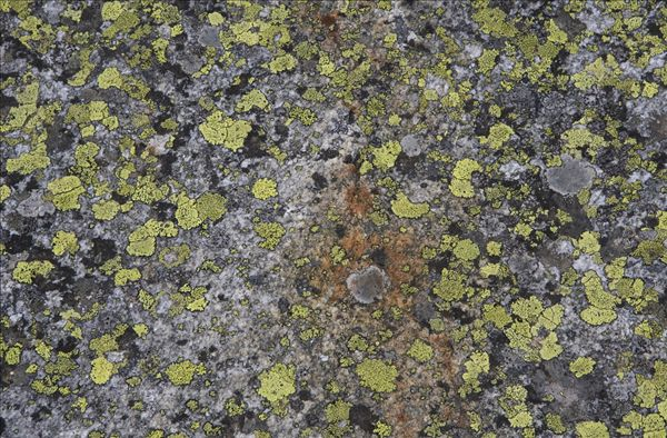 奥地利,苔藓,岩石上,俯视图