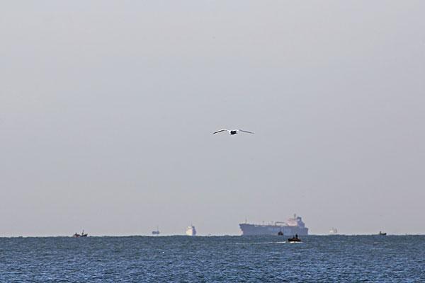 海鸥在海面上飞翔