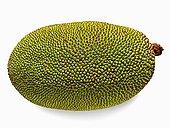 木菠萝,砂质黏土,桑科,水果,世界,重量,向上,长,直径,勒德纳吉里,马哈拉施特拉邦,印度