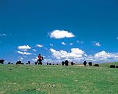 朱马纳草原