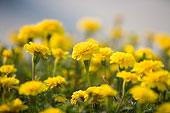 鲜花的图片