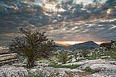 树,岩石,地形