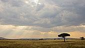 非洲,坦桑尼亚,浩大,朴素,塞伦盖蒂国家公园
