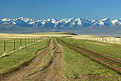 新疆,草地,风景