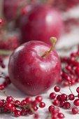 红苹果,浆果,荚莲属植物