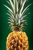 菠萝,绿色背景