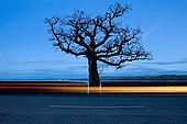 道路,树,靠近