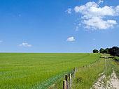 年轻,大麦,绿色,农田,靠近,泥土,道路