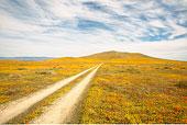 轮胎印,羚羊谷,加利福尼亚,美国