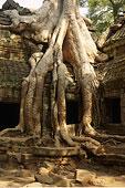 塔普伦寺,庙宇,吴哥窟,柬埔寨