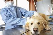兽医,工作,狗