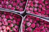 玫瑰,市场,曼谷,泰国