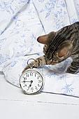猫,玩,钟表