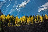 秋天的落叶,悬崖上的,湖产品,步道,优鹤国家公园,英属哥伦比亚大学,加拿大
