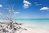 红树林,海滩,省,古巴