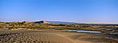 绿洲,鳗鱼,戈壁沙漠,蒙古
