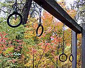 吊环,悬挂,公园,加利福尼亚,美国
