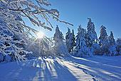 积雪,树,太阳,山,巴伐利亚,德国
