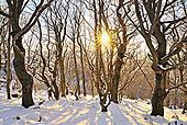山毛榉,树林,冬天,日落,山,巴伐利亚,德国